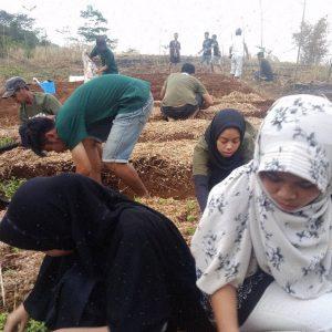 Menanam menjadi kegiatan pemuda Kampung Cibiru