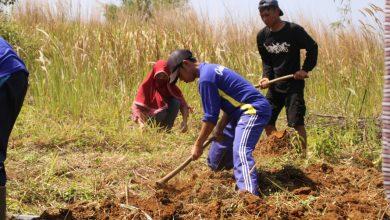 Pemuda Cibiru Sukabumi Menggali Lahan Ilalang Menjadi Lahan Tanaman Organik