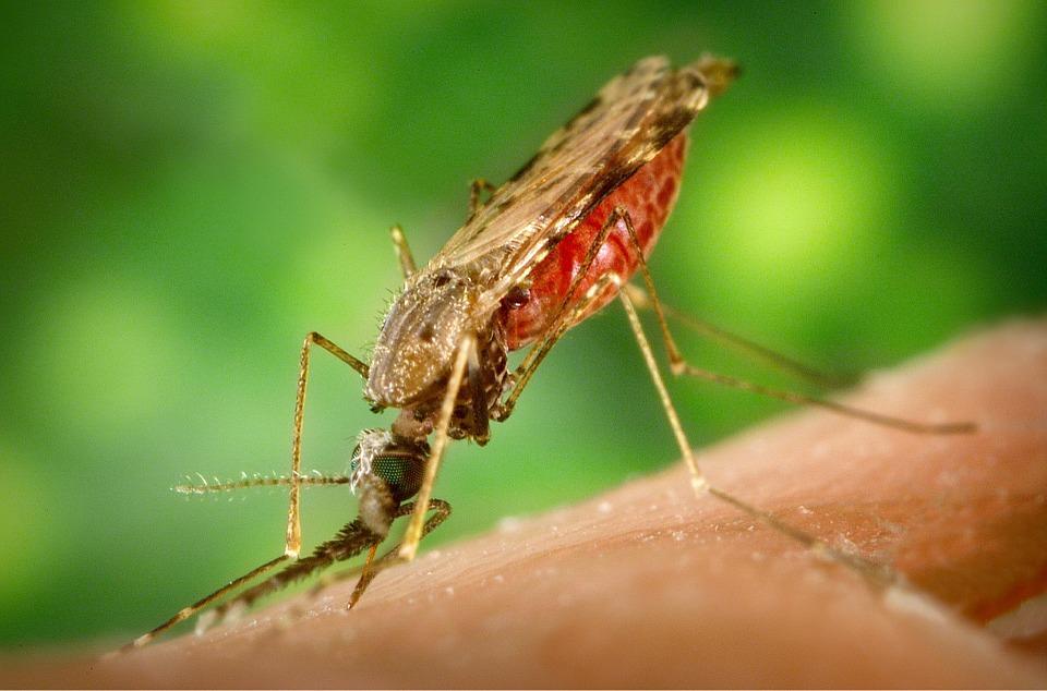 Gejala Penyakit Malaria