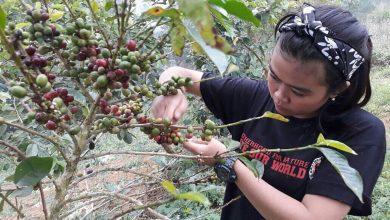 Membuat Kopi Lokal Sukabumi Mempunyai Harga Lebih Baik Bersama Komunitas Edukopi (2)