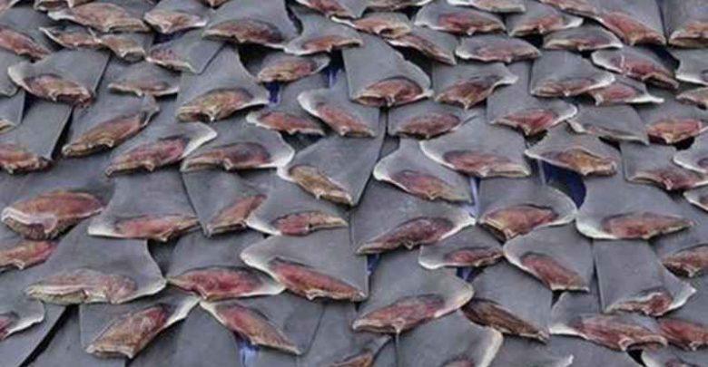 Sirip Ikan Hiu