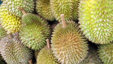 Memilih durian manis