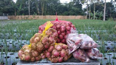 Cerita Petani Muda Sukabumi Melawan Harga Tengkulak