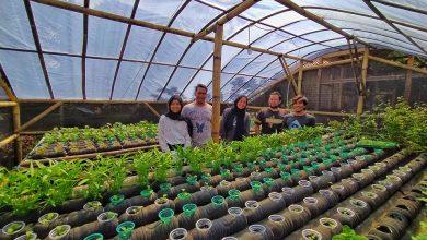 Budidaya Hindropink dengan Botol Bekas di Kampung Wisata Hanjeli Sukabumi