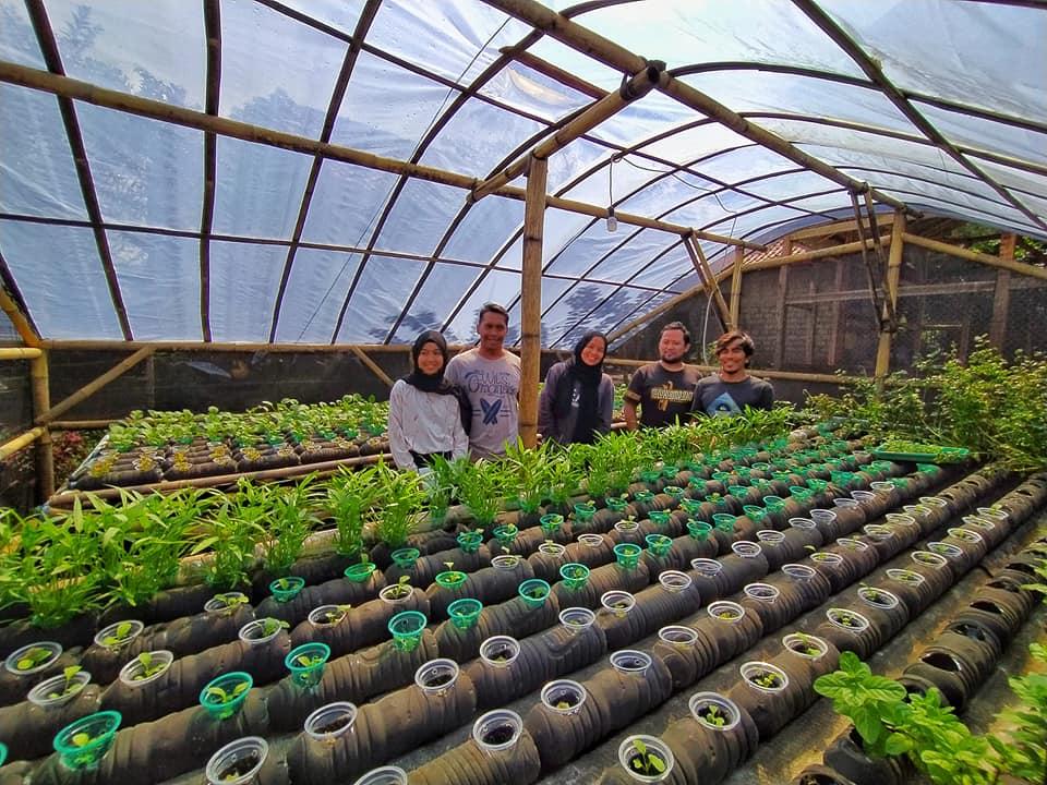Budidaya Tanaman Hidroponik Dengan Botol Dan Barang Bekas Bukan Paralon Kenapa Tidak Sabumi