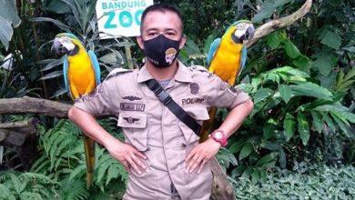 Kebun Binatang Bandung Dibuka Kembali. Foto: anggassp1993