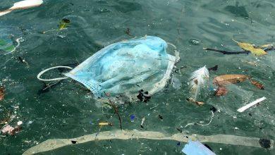 Dampak Masker Sekali Pakai Bagi Lingkungan dan Satwa liar. Foto https://www.vicnews.com/