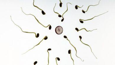 Fakta Dibalik Sperma Akan Hamil jika Ditelan