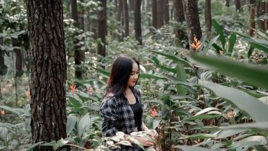 Taman Wisata Gunung Pancar. Foto https://www.instagram.com/gunungpancar/