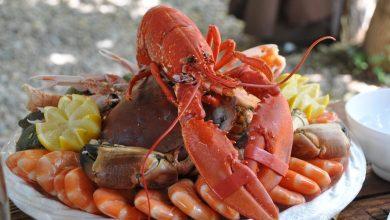 Tidak Menunggu Menteri KKP Baru Ekspor Benih Lobster Langsung Dihentikan