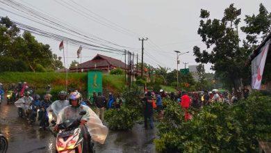 Pohon tumbang Karena Angin Puting beliung Sukabumi