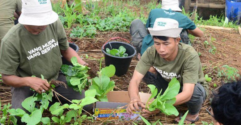 Program Petani Milenial Jabar Sudah Dilakukan Di Kampung Cibiru, Cicantayan, Sukabumi